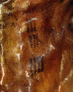 Otzi-tattoos-compressed